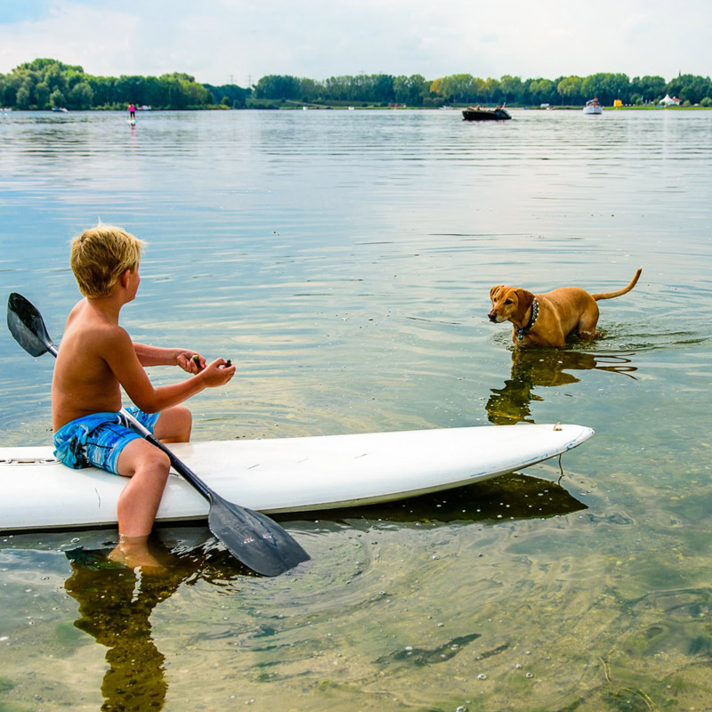 Honderstrand_Doggy_Beach-Area_X_Roermond_Dagstrand_Doggy-Beach-SUP-AreaX-Roermond_800x800px