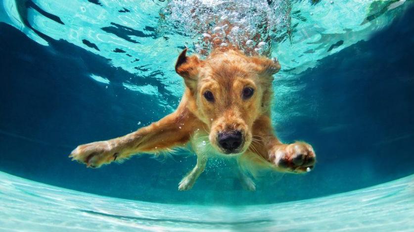 Area-X-DoggyBeach-3-Honderstrand_Doggy_Beach-Area_X_Roermond_Dagstrand_Doggy-Beach-SUP-AreaX-Roermond2